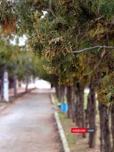 Дорога к морю поселок Песчаное